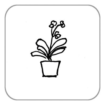 Pflanze bis 0,50 m (nur Umzug, keine Einlagerung)