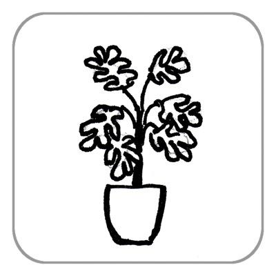 Pflanze über 0,50 m (nur Umzug, keine Einlagerung)